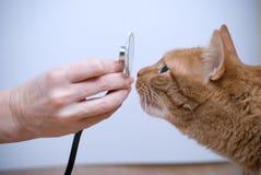 Veterinario y gato Foto de archivo