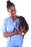 Veterinario y perro Imágenes de archivo libres de regalías