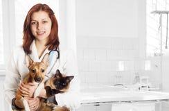 Veterinario y perro y gato Foto de archivo libre de regalías