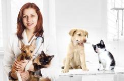 Veterinario y perro y gato Imagenes de archivo