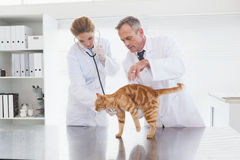 Veterinarios que examinan un gato anaranjado Imagen de archivo