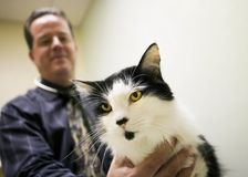 veterinary офиса кота Стоковая Фотография RF
