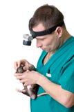 veterinary хирурга стоковые фото