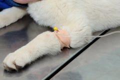 Veterinary Stock Photography