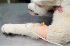 Veterinary Royalty Free Stock Photo