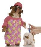 Veterinary care Royalty Free Stock Photos