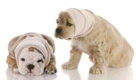 Veterinary care Stock Image