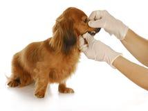 Veterinary care Royalty Free Stock Photo