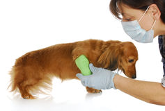 Veterinary care royalty free stock image