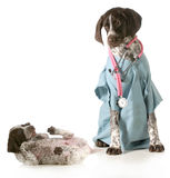 Veterinary care Stock Image