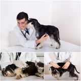Veterinary care collection Royalty Free Stock Photo
