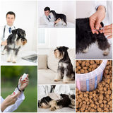 Veterinary care collection Stock Images