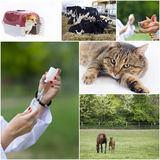 Veterinary care collection Stock Photos