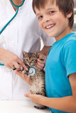 Veterinary care concept Royalty Free Stock Image