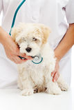 Veterinary care concept Royalty Free Stock Photos