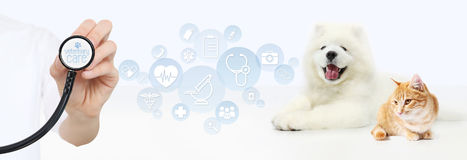 Veterinary care concept. hand with stethoscope, dog and cat with. Graphic symbols isolated on white background Royalty Free Stock Photography