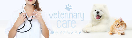 Veterinary care concept. hands with stethoscope, dog and cat wit Royalty Free Stock Photo