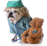 Veterinary care Stock Photography