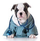 Veterinary care Stock Photos