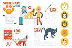 Veterinary care infographic Royalty Free Stock Images