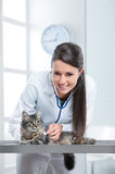Veterinary caring of a cute cat royalty free stock images