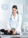 Veterinary caring of a cute cat Royalty Free Stock Photo