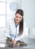 Veterinary caring of a cute cat Stock Images