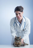 Veterinary and cat Stock Image