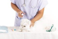 Veterinary cat  healing Royalty Free Stock Photos