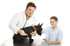 Veterinary Check Up Stock Image