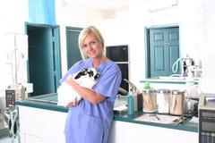 Veterinary Clinic. Rabbit having check up in veterinary clinic Stock Photography
