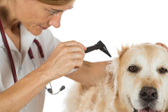 Veterinary clinic Royalty Free Stock Photography