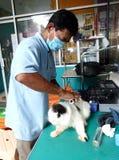 Veterinary clinic Stock Image