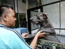 Veterinary clinic Royalty Free Stock Image