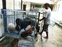 Veterinary clinic Royalty Free Stock Photography