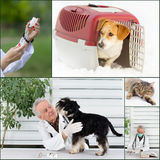Veterinary collection Royalty Free Stock Image