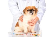 Veterinary concept. Royalty Free Stock Image