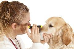 Veterinary consultation Royalty Free Stock Photo
