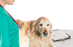 Veterinary consultation Stock Images