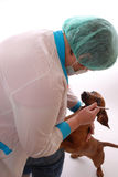 Veterinary dentistry Royalty Free Stock Photos
