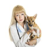 Veterinary doctor Royalty Free Stock Photo