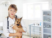Veterinary doctor and dog Royalty Free Stock Photography