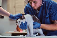 Veterinary doctor examining a sick cat with stethoscope in a vet clinic. Veterinary examining a sick cat with stethoscope in a vet clinic stock photo