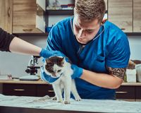 Veterinary doctor examining a sick cat with stethoscope in a vet clinic. Veterinary examining a sick cat with stethoscope in a vet clinic stock photography