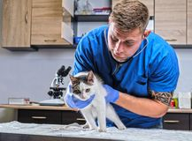 Veterinary doctor examining a sick cat with stethoscope in a vet clinic. Veterinary examining a sick cat with stethoscope in a vet clinic stock image