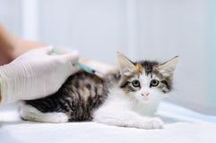Veterinary doctor giving injection for kitten Stock Image