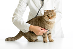 Veterinary doctor with stethoscope and cat. Isolated on white Stock Photo
