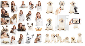 Veterinary doctor Royalty Free Stock Images