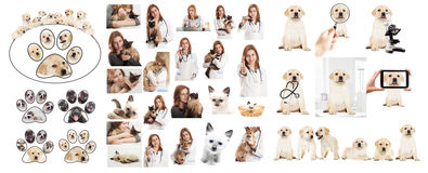 Veterinary doctor Royalty Free Stock Photos
