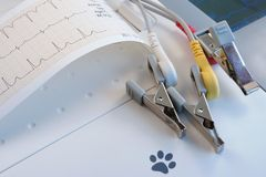 Veterinary ECG with paper record and electrodes. Veterinary ECG with paper record and crocodile type electrodes royalty free stock images